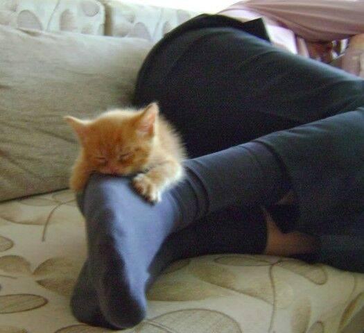 Почему кошка спит на спине раскинув лапы? ? научные факты.