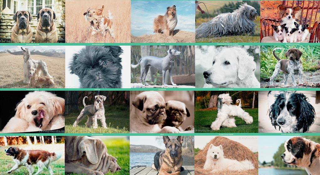 15 маленьких умных пород собак