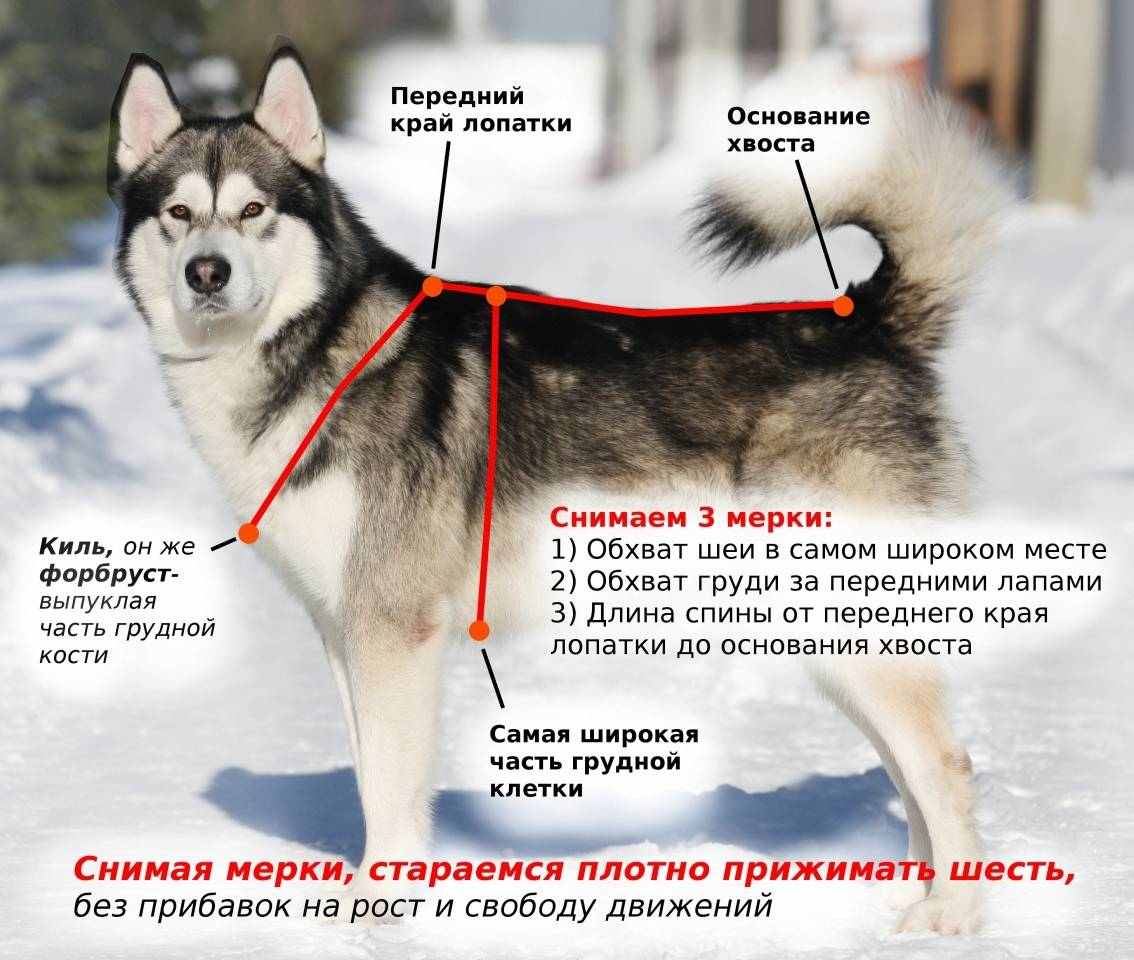 Как подобрать собаке шлейку?