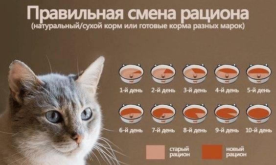 Как часто котята ходят в туалет: по маленькому и по большому, сколько раз в день должен писать кот