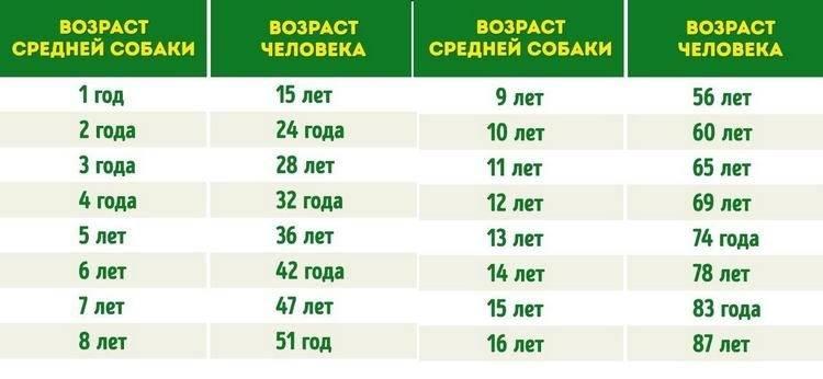 ᐉ сон у собаки: сколько спят собаки в сутки, сколько должен спать щенок в 2 месяца, длительность и фазы собачьего сна - kcc-zoo.ru