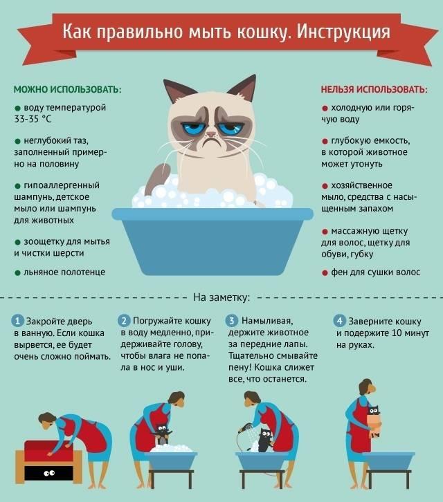 Как помыть кота если он не любит воду: эффективные способы искупать питомца