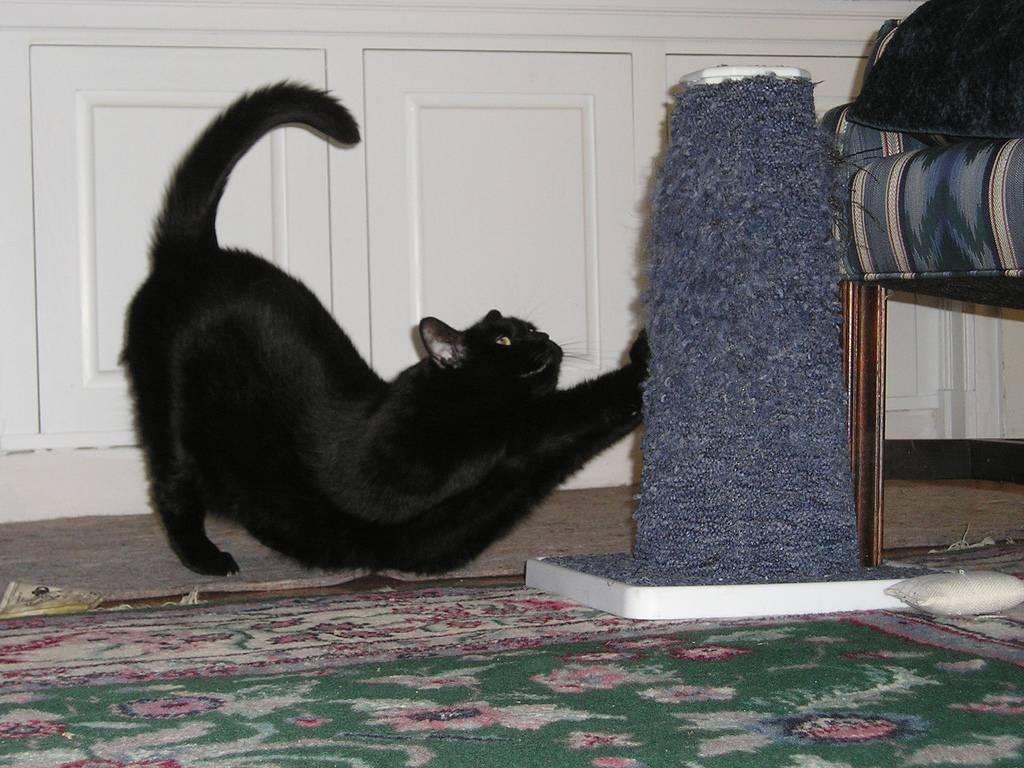 5 способов отучить кошку драть мебель