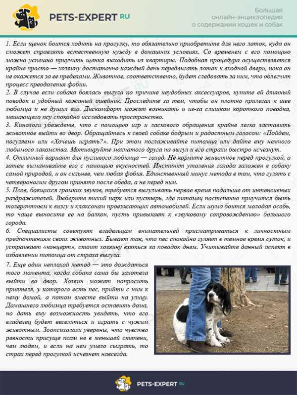 Собака боится громких звуков (выстрелов, салюта, грома и грозы) - что делать и как отучить - dogtricks.ru