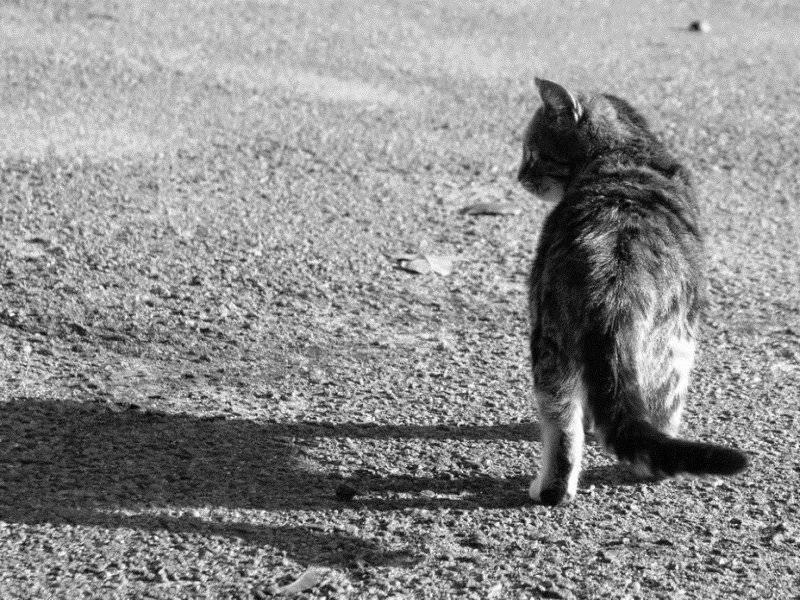 К чему кошка уходит из дома, котята не приживаются (приметы)