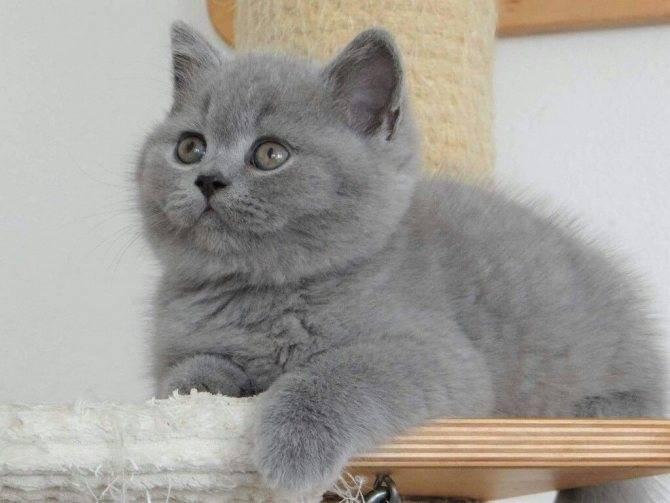 Имена для породистых кошек и котов