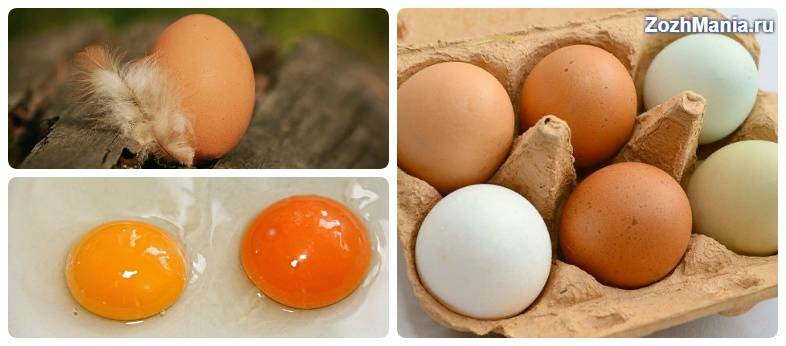Можно ли кормить собаку сырыми яйцами. можно ли давать собакам яйца? собакам нельзя сырую рыбу - новая медицина