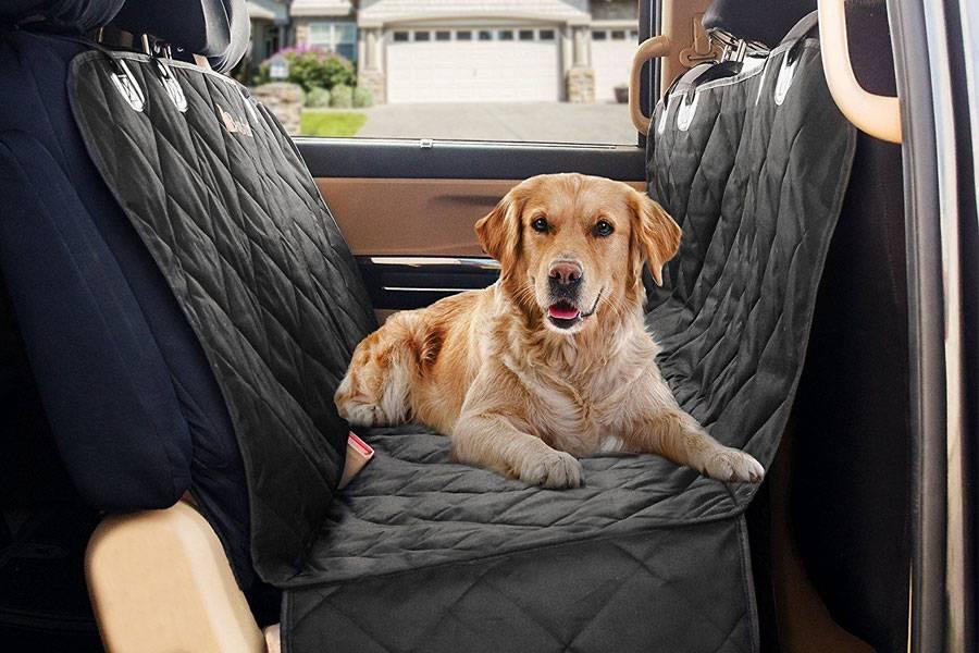 Как перевозить собаку в машине?