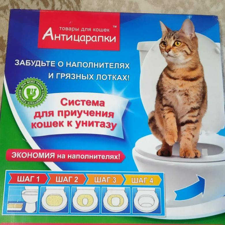 Как приучить кошку к унитазу, если она уже взрослая
