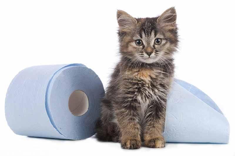 Что делать, если кота или кошку рвет после еды непереваренной пищей: рвота с желчью, пеной и кровью, почему и как лечить в домашних условиях