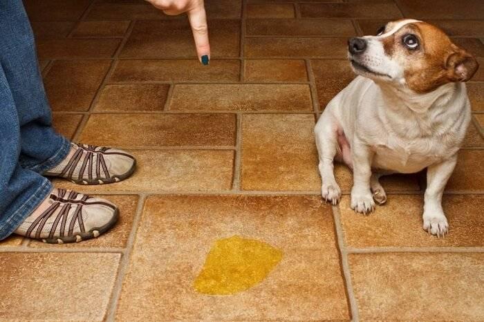 Как снять квартиру, если у вас домашнее животное