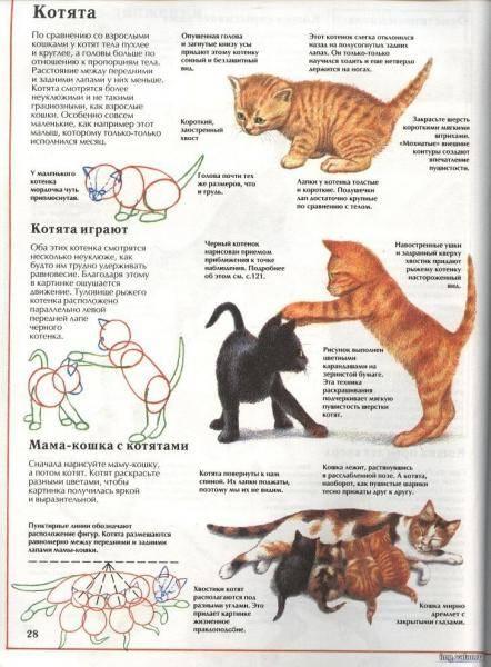 Что должен уметь котенок в 1 месяц. развитие котят по неделям и месяцам. возраст котенка и его характеристики. определение плана кормления - медицина для тебя