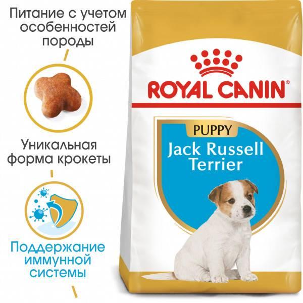 Чем как и сколько кормить джек рассел терьера: щенка и в взрослую собаку