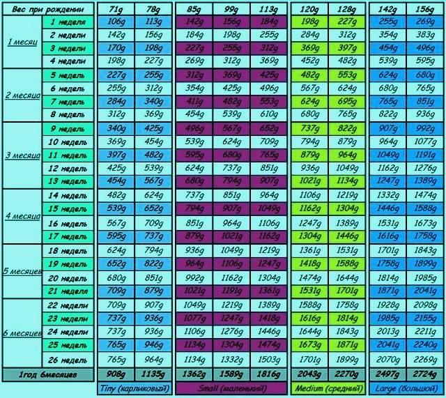 Лабрадор.ру примерные показатели промеров щенка лабрадора ретривера