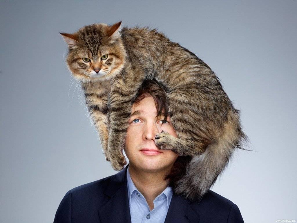 Что кошка думает о человеке, своём доме и мире в целом.