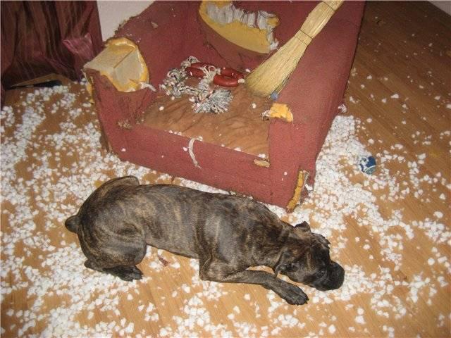 Собачья привычка грызти вещи и кусаться.