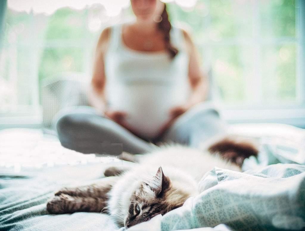 Чем опасны кошки для беременных: можно ли гладить питомца в таком положении