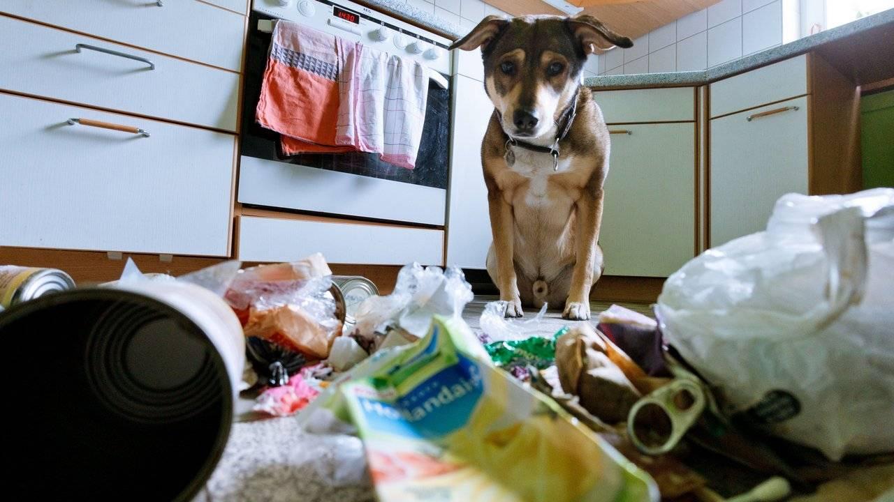 Как отучить собаку грызть мебель и вещи: эффективные методы и средства, чем можно обработать
