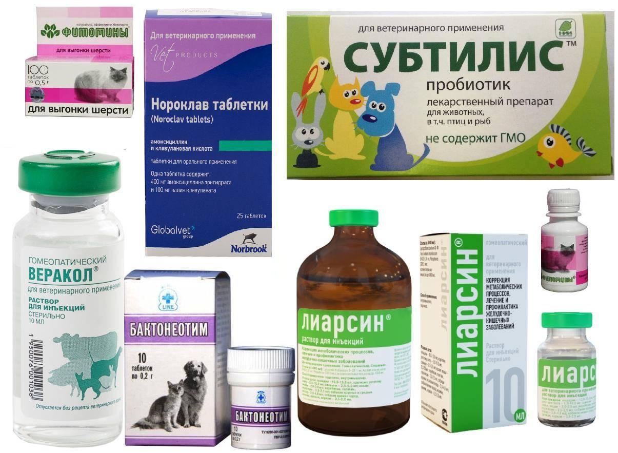 Панкреатит у кошек: симптомы и лечение опасного заболевания