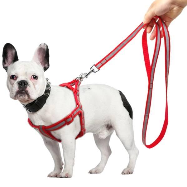 Как одевать на собаку шлейку: пошаговая инструкция и полезные советы - animallist.ru