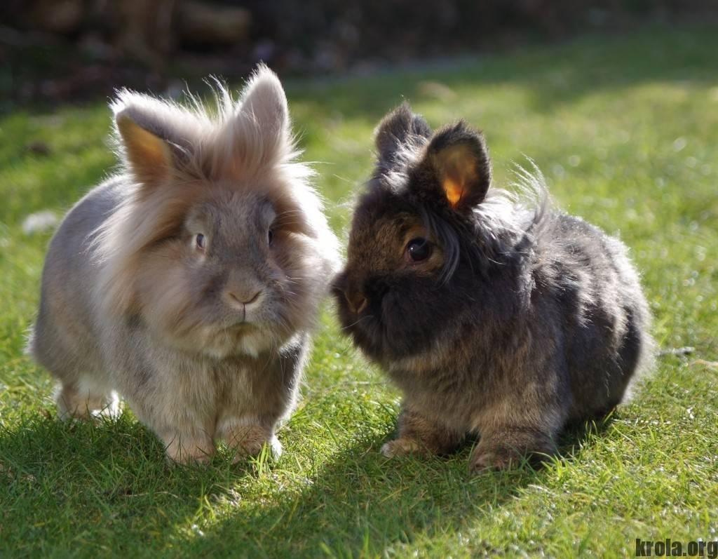 Породы декоративных кроликов с фото, названиями и описанием