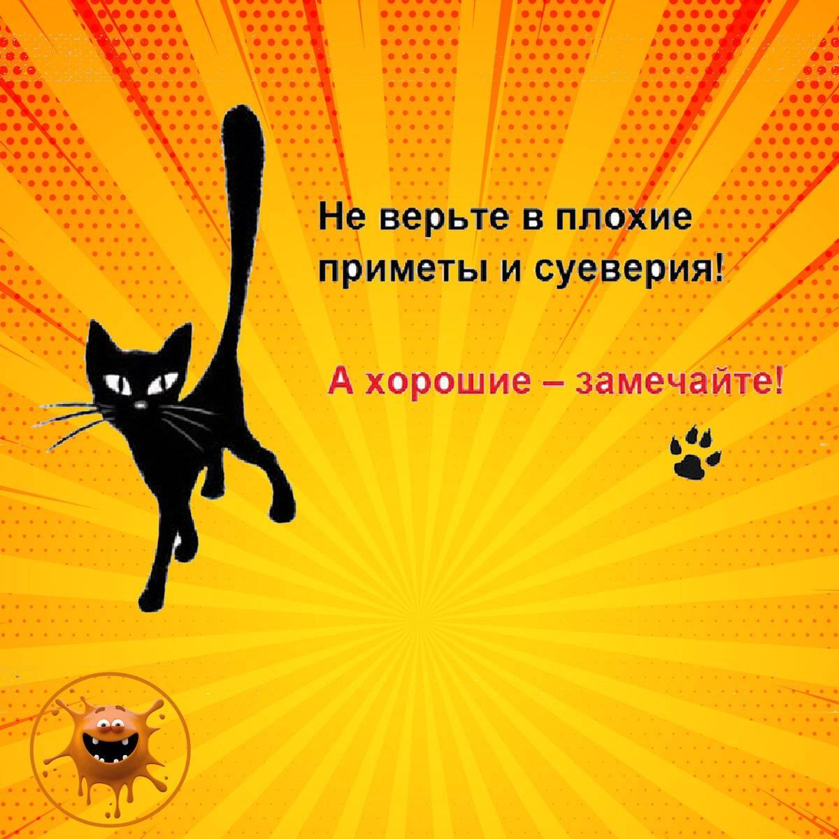 Черный кот — предвестник несчастья или символ удачи и богатства?