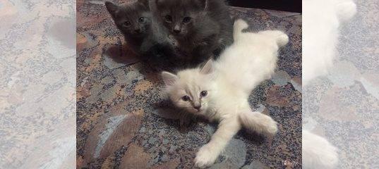 Как пристраивать котят: мой опыт