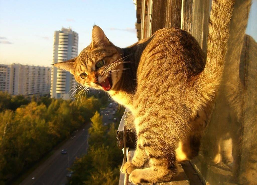 Хорошая ли у котов память?