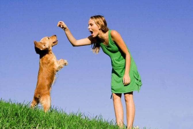 Как отучить собаку прыгать на людей, советы для щенка лабрадора и не только