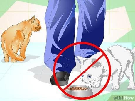 Как метят коты территорию в квартире: что делать