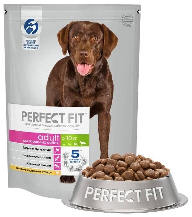 Рейтинг лучших кормов для собак мелких пород