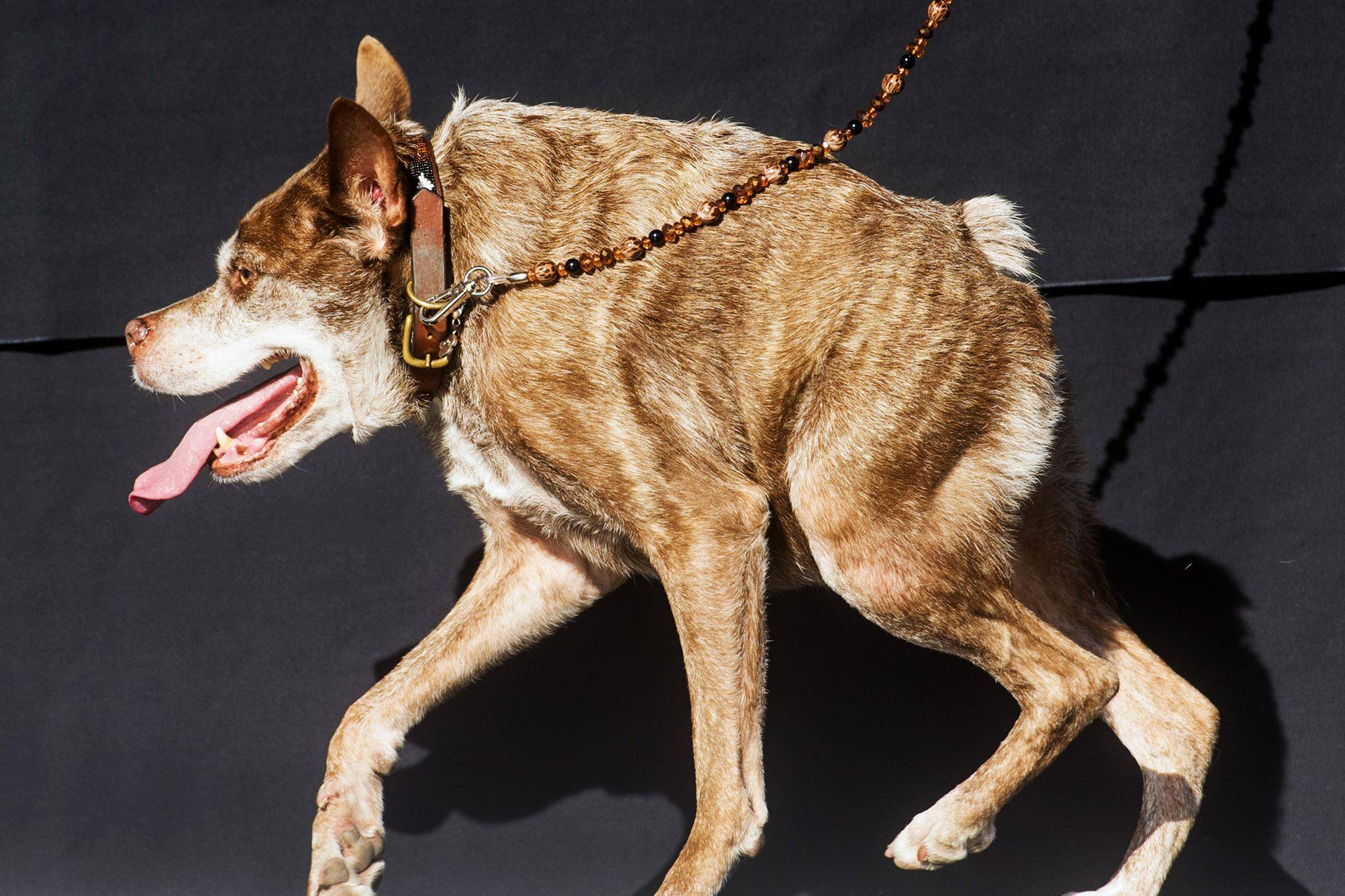 Настырность в крови: Топ-5 самых упрямых пород собак