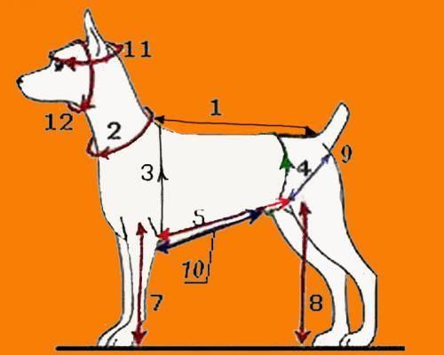 Выбираем размер одежды и обуви для собак: мерки, таблицы, особенности