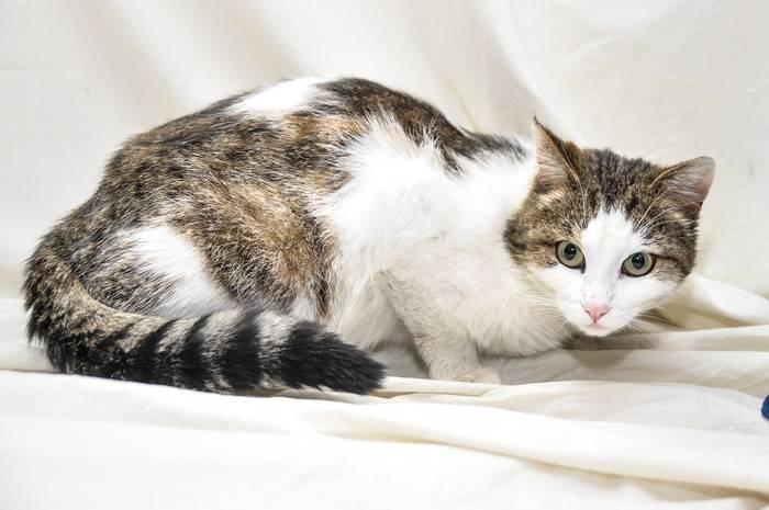 Окрас, содержание и кормление беспородных кошек и котов