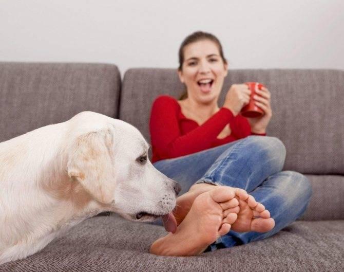 Почему собака лижет ноги хозяину и что это значит