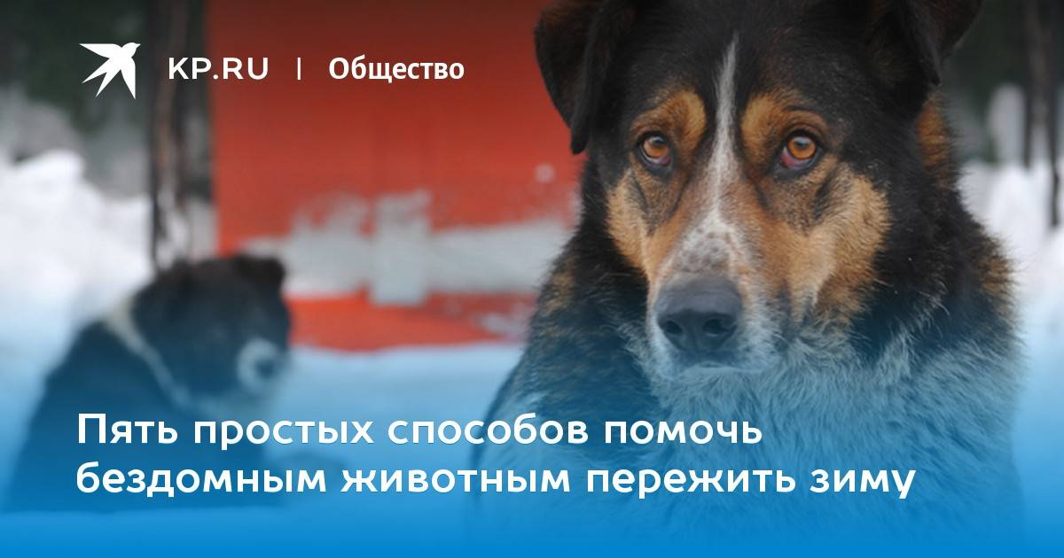 Как помочь бездомным собакам