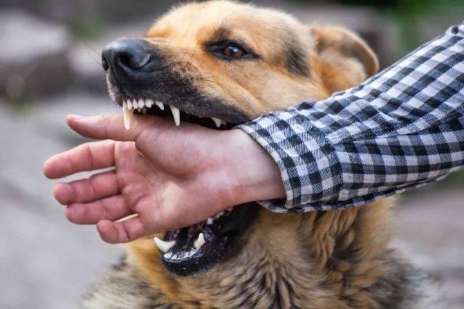 Куда обращаться и что делать, если покусала собака?