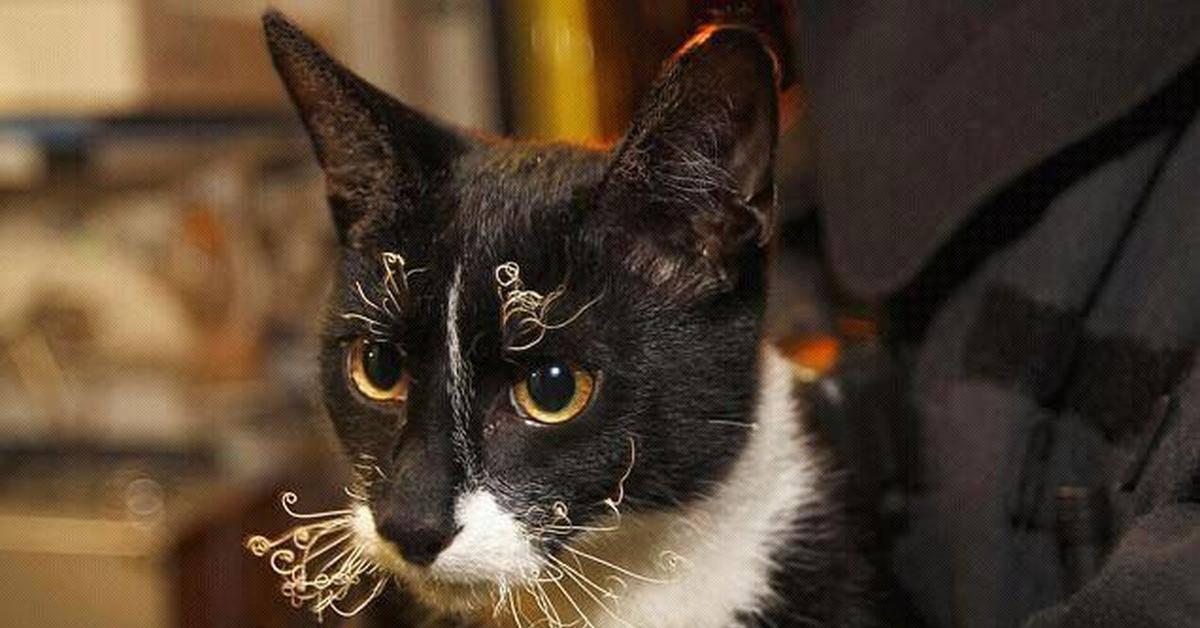 Почему у кота выпадают усы: недостаток витаминов, нарушенный рацион
