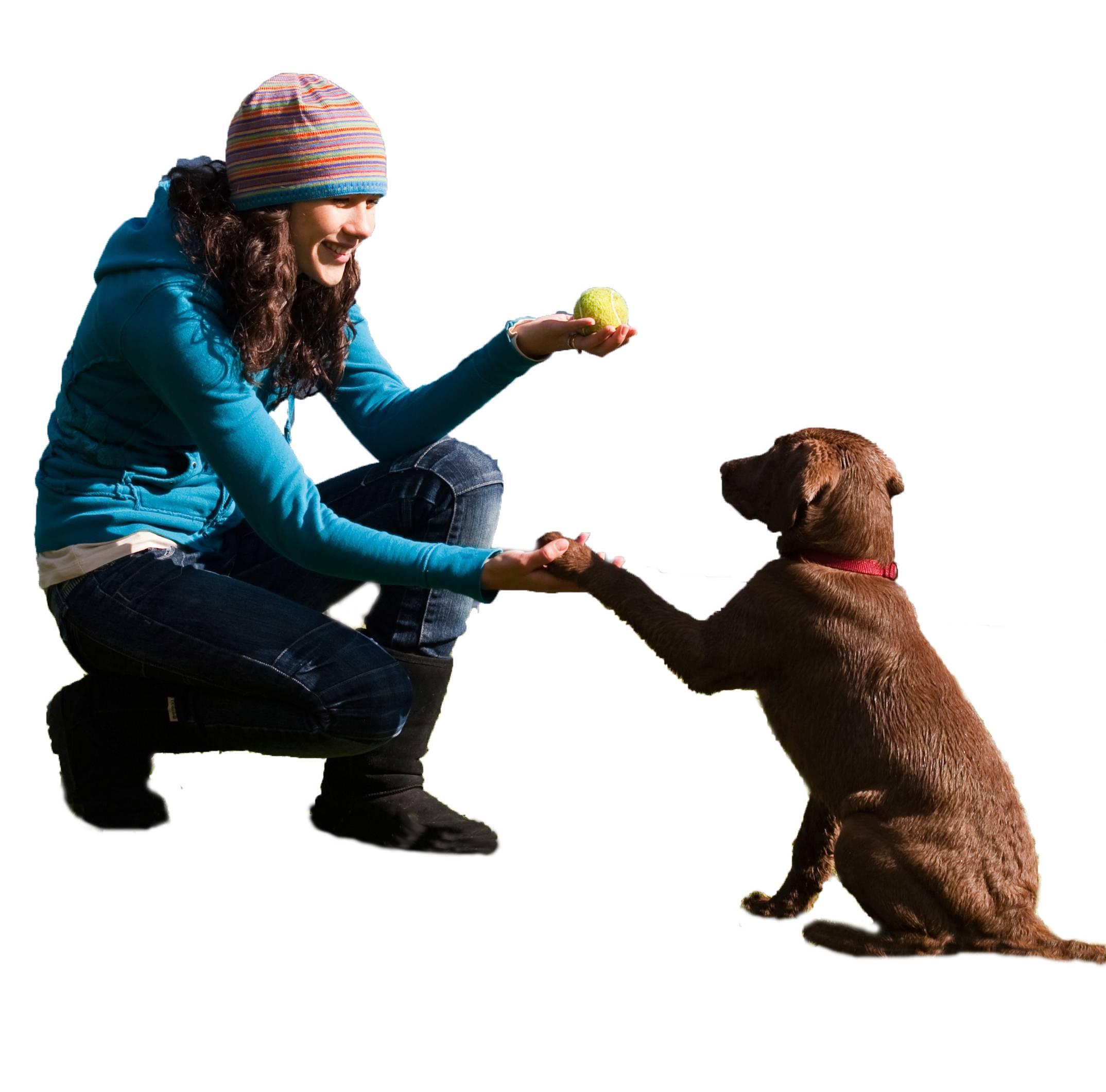 Как отучить собаку прыгать на чужих людей и хозяина