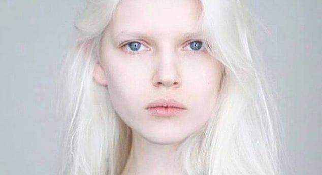 Белый доберман альбинос: особенности собак