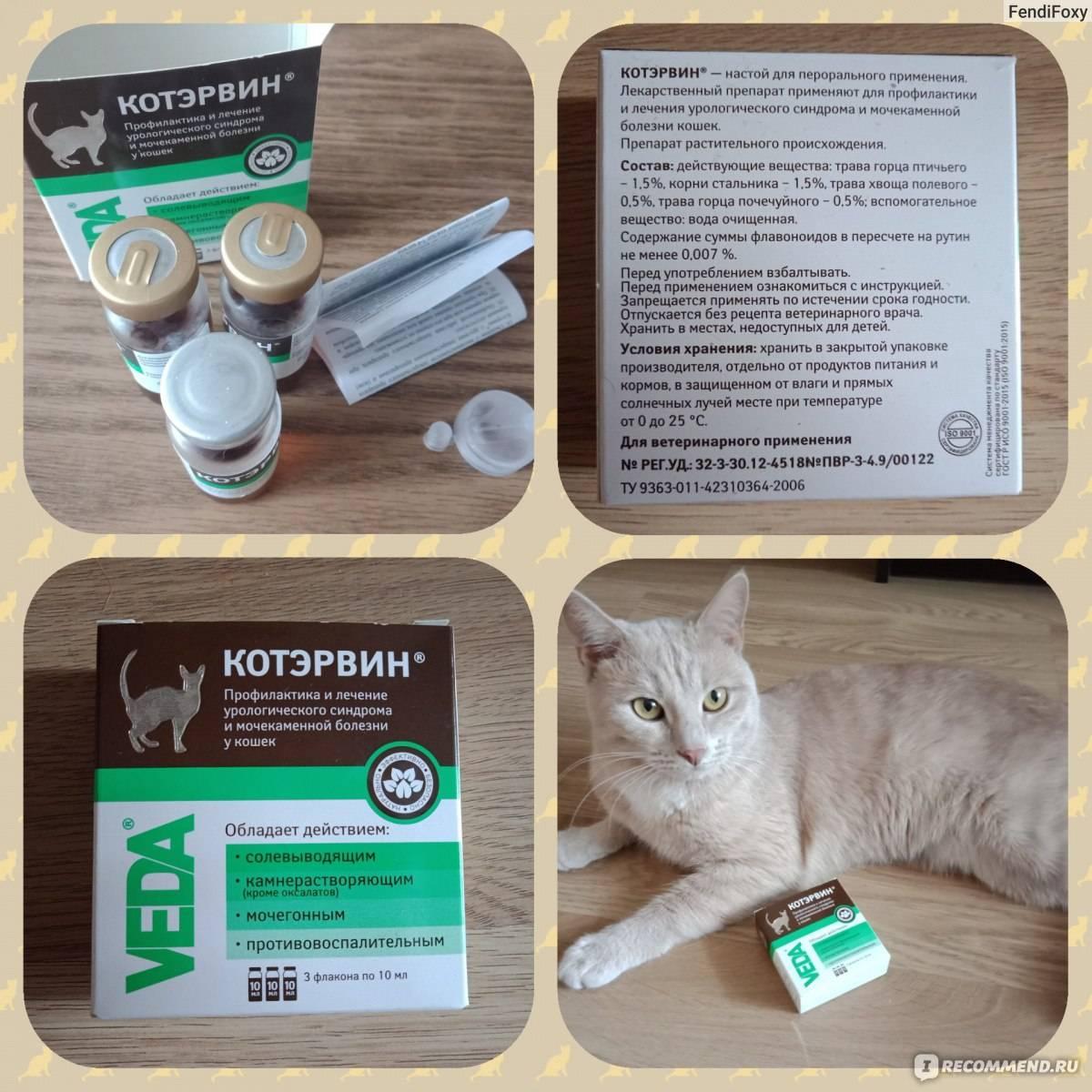 Котэрвин для кошек и собак инструкция по применению лекарства  котэрвин в ветеринарии состав дозировка отзывы