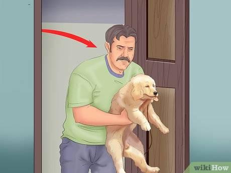 Можно ли отучить той-терьера дома ходить в туалет где попало и как приучить питомца к лотку или пеленке