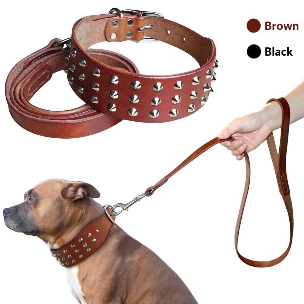 Как выбрать ринговку для собак?