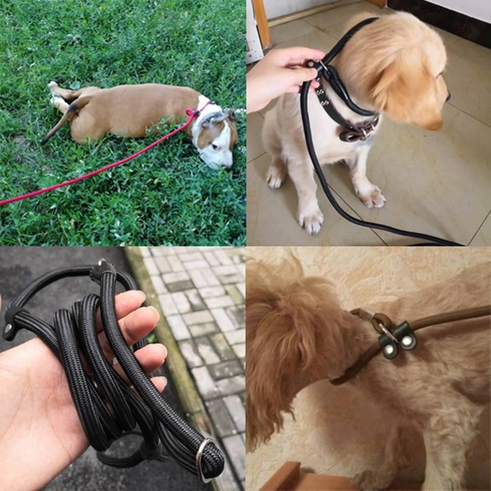 Поводки для собак: какие бывают и как выбрать?
