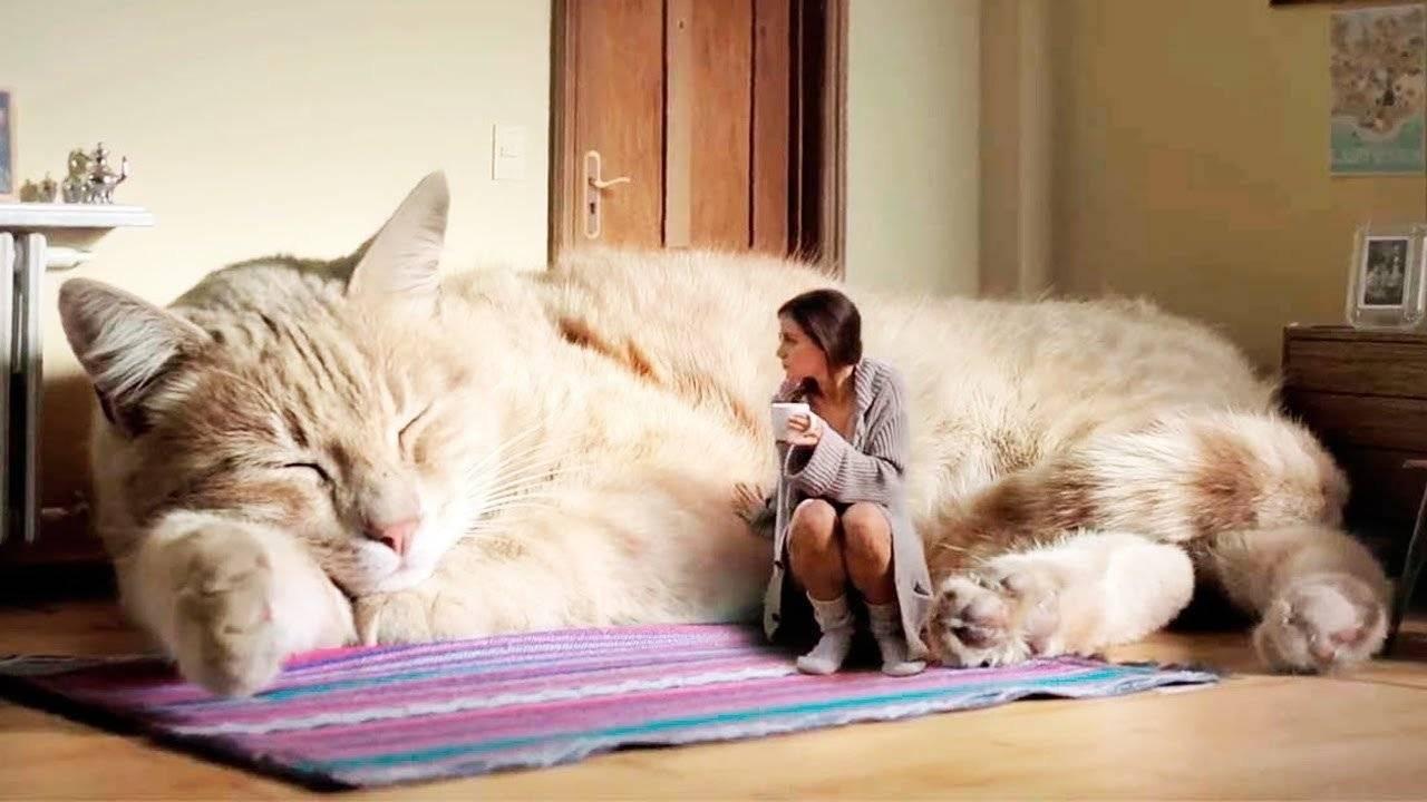 10 вещей, которых боятся кошки — сайт эксперта по животным — howmeow