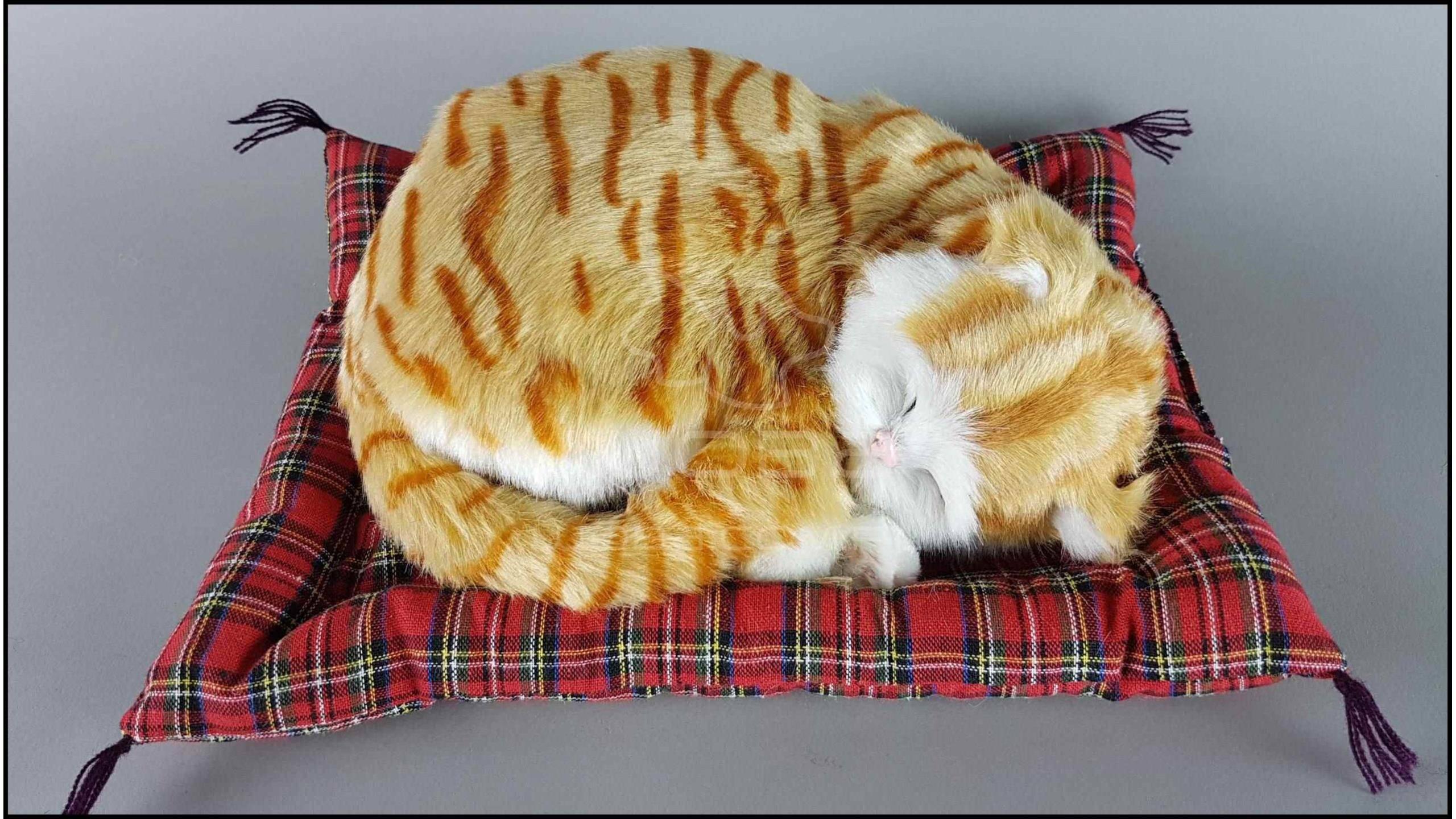 Почему кошка спит в вашей постели: основные приметы и что это может значить