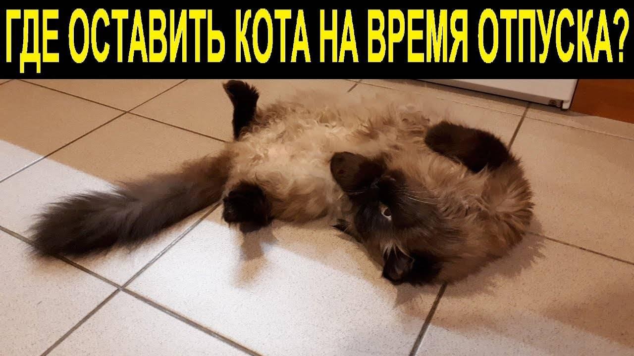 Кошка во время отпуска | мои домашние питомцы