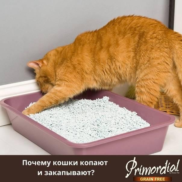 Почему кошка закапывает еду