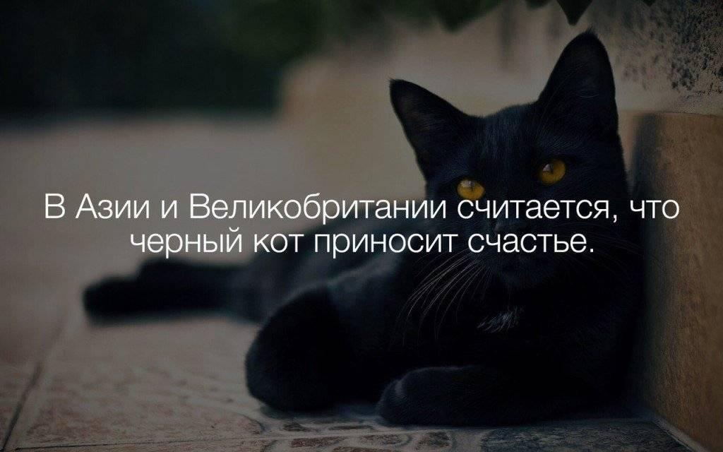 Все о приметах с черной кошкой: что значит, приносит ли счастье в дом и другие