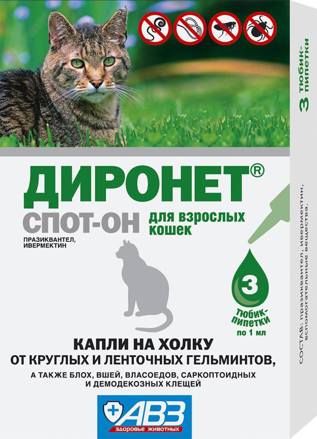 Способ применения препарата диронет спот-он для кошки: обзор инструкции